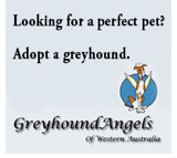 Greyhound Angels - Adopt a Greyhound