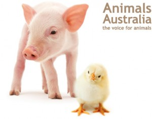 animals australia charity